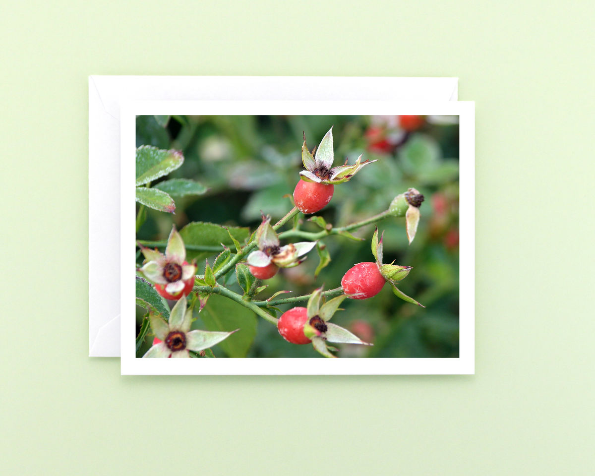Red Rose Hips Nature Photography Note Card - product images  of