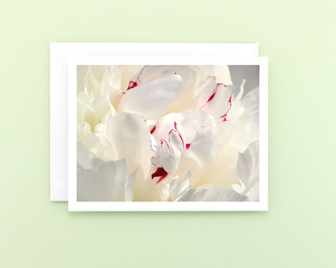 White,Peony,Flower,Petals,Photography,Note,Card,,Paeonia,'Festiva,Maxima',Paper goods, Stationery, white floral photography note card, white peony flower petals, all occasion blank notecard, nature photography, a2 note card, macro flower photo, botanical art, Mary Foster Creative