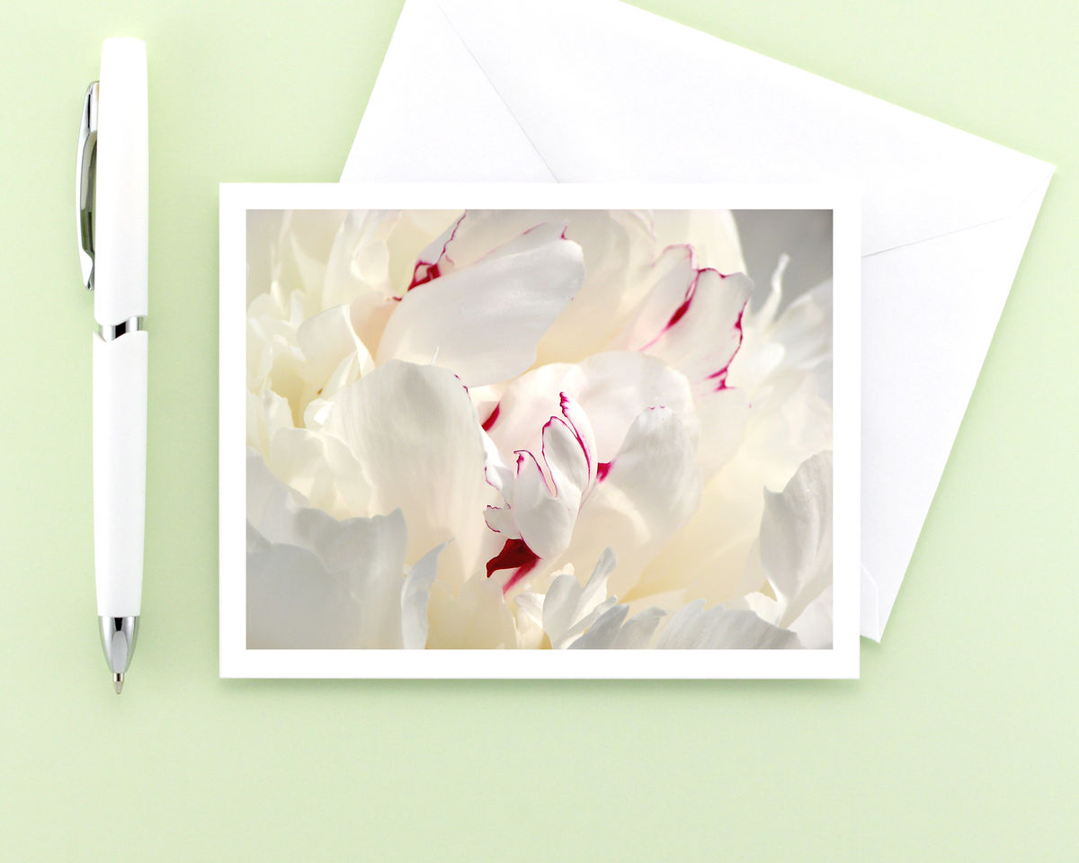 White Peony Flower Petals Photography Note Card, Paeonia 'Festiva Maxima' - product images  of