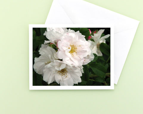 White,Roses,Flower,Photo,Note,Card,,Rosa,rugosa,'Henry,Hudson',Paper goods, Stationery, white roses floral photography note card, all occasion blank notecard, nature photography, a2 note card, macro flower photo, botanical art, Mary Foster Creative