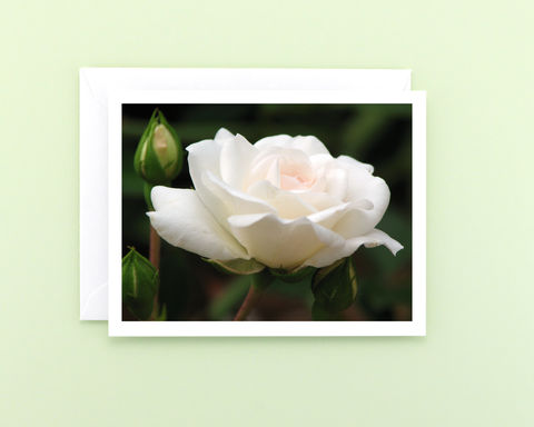 White,Rose,Blossom,Photo,Note,Card,Paper goods, Stationery, white rose flower photo note card, a2 blank notecard, macro floral photography card, blank greeting card, botanical art, nature photograph, Mary Foster Creative