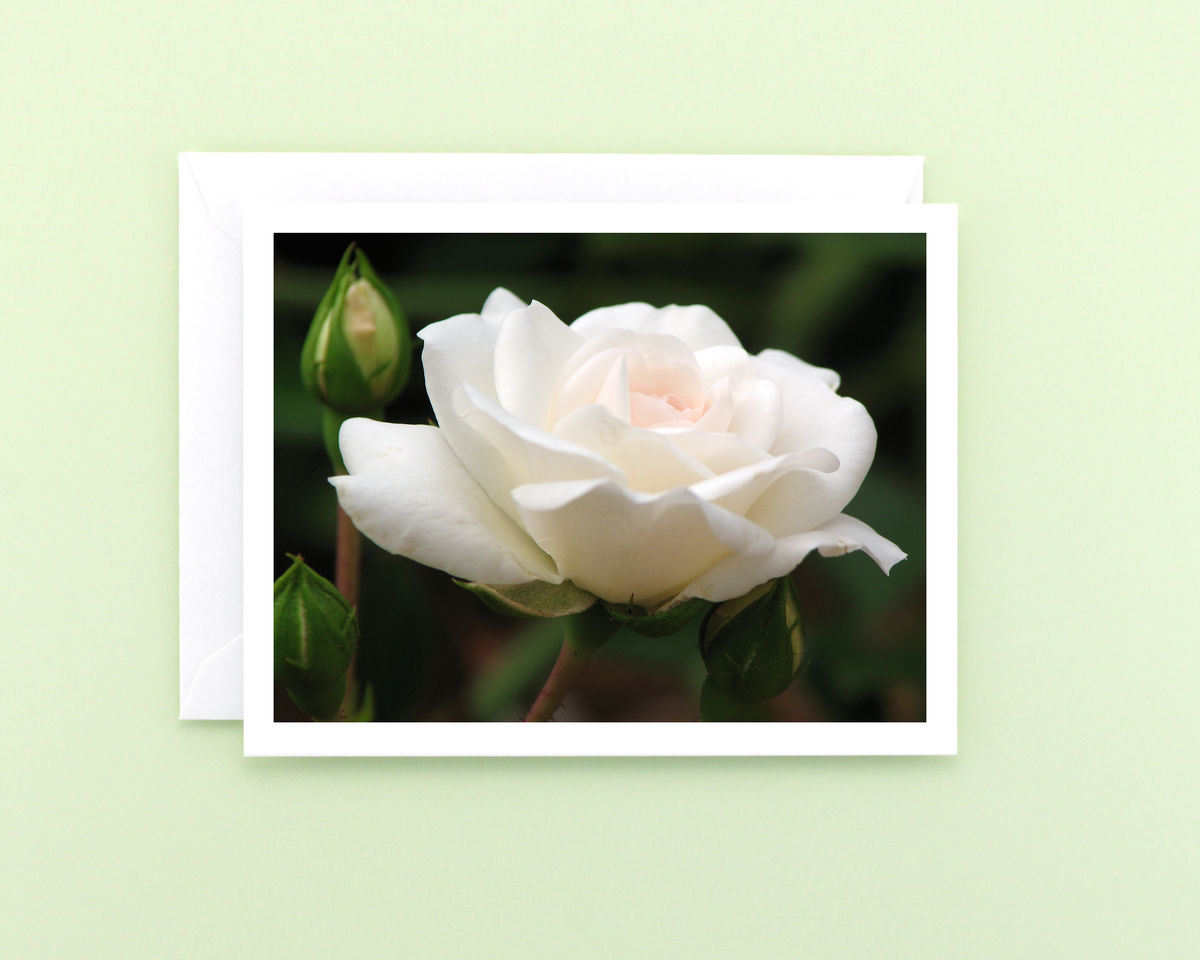 White Rose Blossom Photo Note Card - product images  of