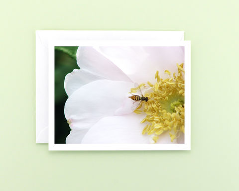 Bee,on,White,Rose,Flower,Photography,Note,Card,Paper goods, Stationery, white rose flower photography note card, a2 blank notecard, macro floral photo card, blank greeting card, botanical art, nature photograph, Mary Foster Creative