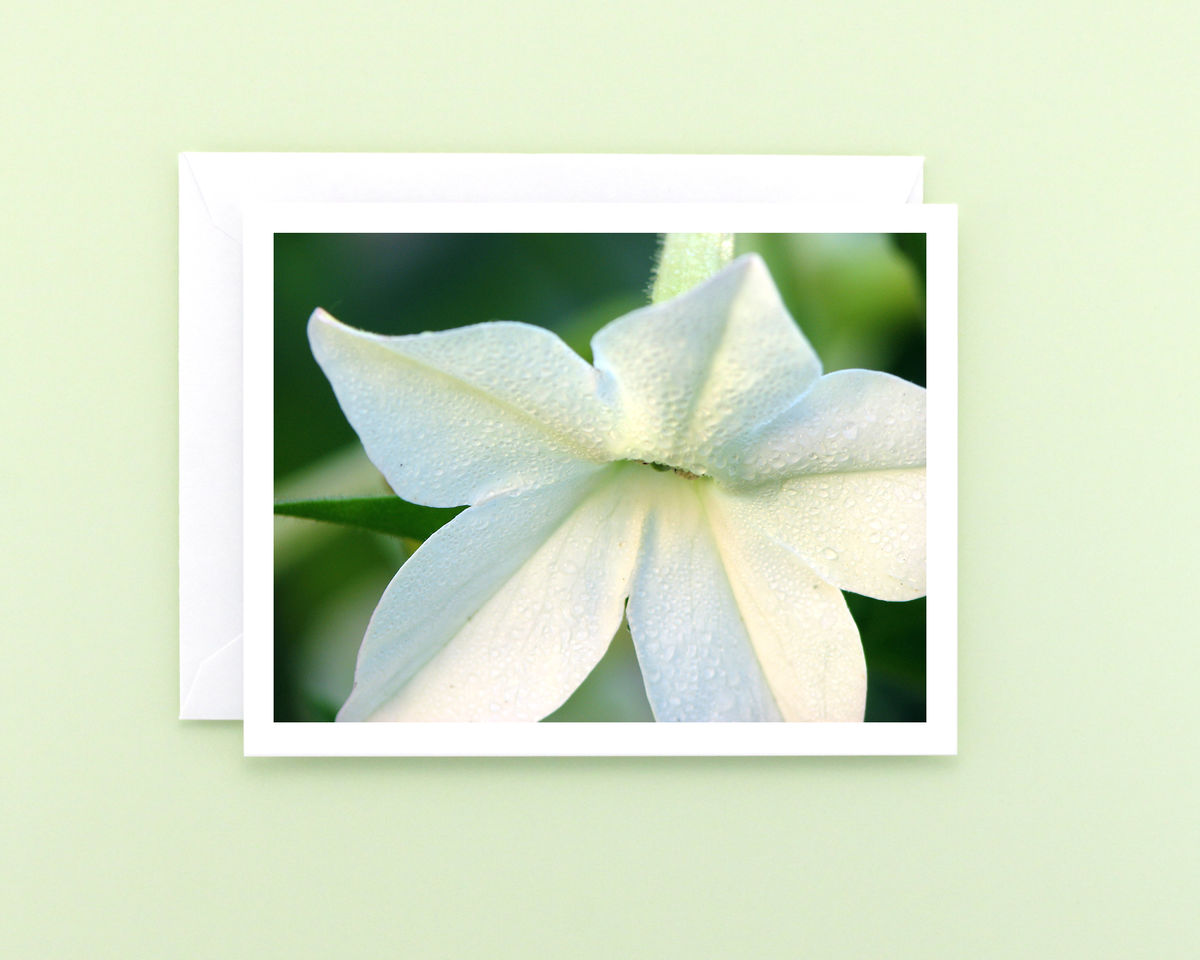 White Nicotiana Flower with Dewdrops Floral Photography Note Card - product images  of