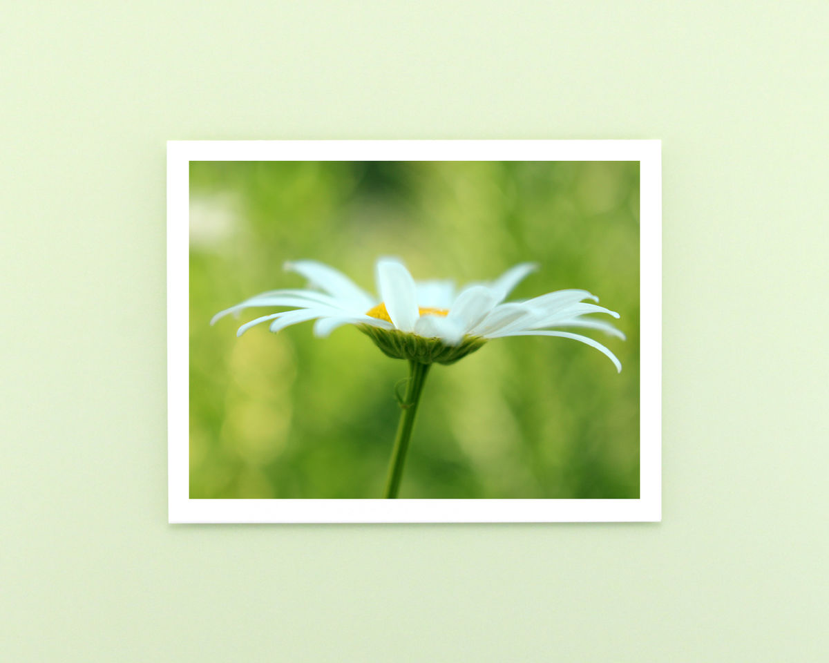 White Oxeye Daisy Flower Photo Note Card - product images  of