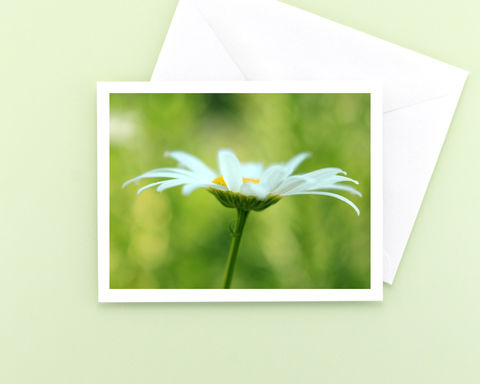 White,Oxeye,Daisy,Flower,Photo,Note,Card,Paper Goods, all occasion stationery, blank note card, floral photography, white Oxeye Daisy flower, green, nature photo, garden flower photography note card, floral note card, photo notecard, Mary Foster Creative