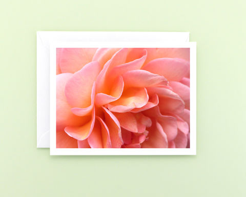 Peachy,Pink,'Abraham,Darby',Rose,Petals,Photography,Note,Card,paper goods, all occasion stationery, flower photo note card, peachy pink rose petals, floral photography notecard, blank greeting card, macro nature photograph, botanical art, Mary Foster Creative