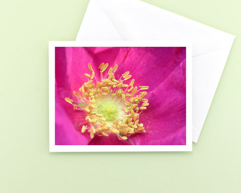 Bright,Pink,'Wildberry,Breeze',Rose,Flower,Photo,Note,Card,paper goods, stationery, note card, bright pink rose flower photography, macro floral photo notecard, blank greeting card, all occasion stationary, nature photograph, botanical art, Mary Foster Creative