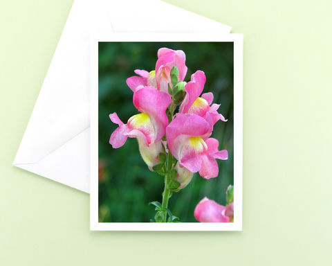 Flower,Photo,Note,Card,,Pink,Snapdragons,paper goods, stationery, note card, pink flower photography, pastel pink snapdragons floral photo notecard, blank greeting card, all occasion stationary, garden flower nature photograph, botanical art, Mary Foster Creative