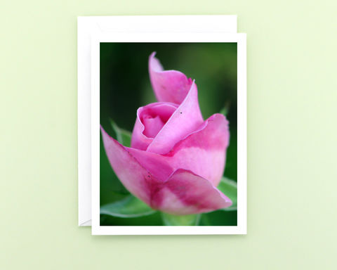 Mary,Rose,Flower,Photography,Note,Card,,Pink,Rosebud,paper goods, stationery, note card, pink rose flower photography, pink rosebud floral photo notecard, blank greeting card, all occasion stationary, nature photograph, botanical art, Mary Foster Creative