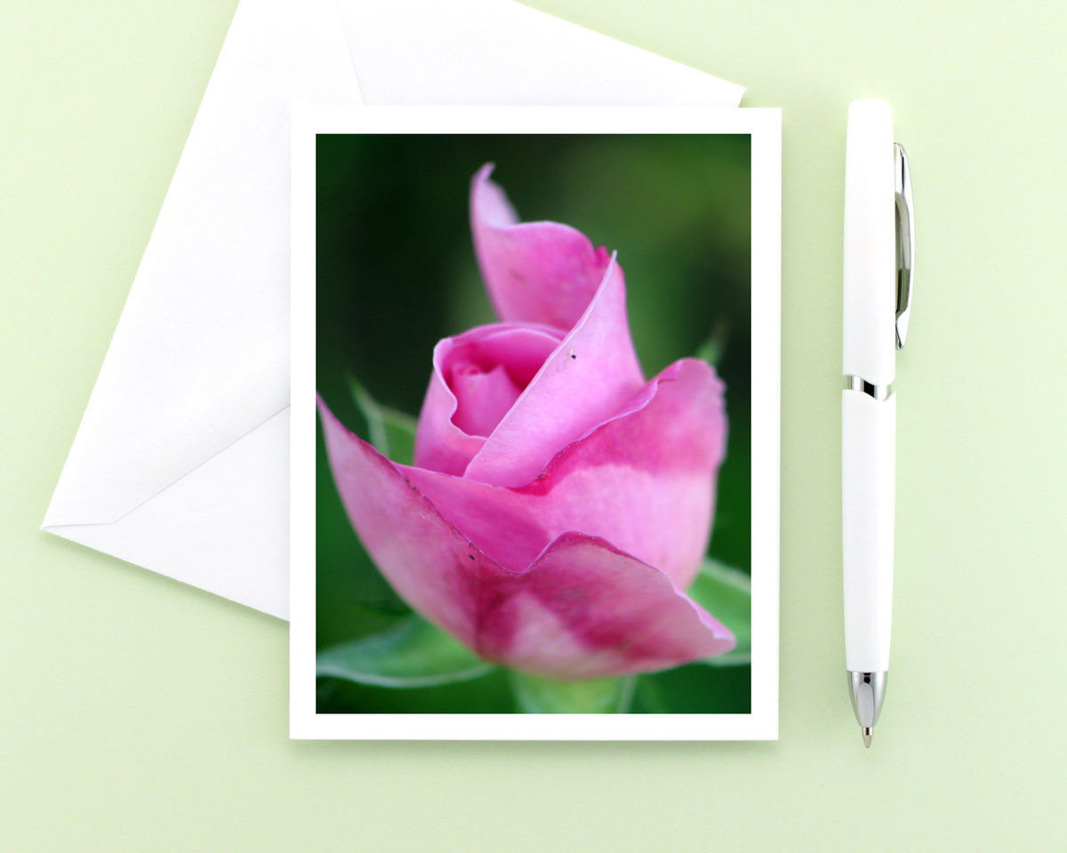 Mary Rose Flower Photography Note Card, Pink Rosebud - product images  of