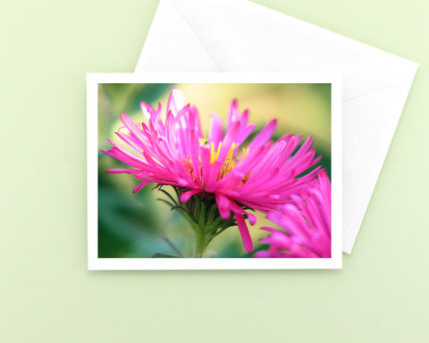 Bright,Pink,Aster,Flower,Photography,Note,Card,Paper Goods, Cards, Photo, all occasion stationery, blank note card, floral photography, bright pink aster flower, nature photo note card, garden flower photography note card, floral note card, photo notecard, Mary Foster Creative