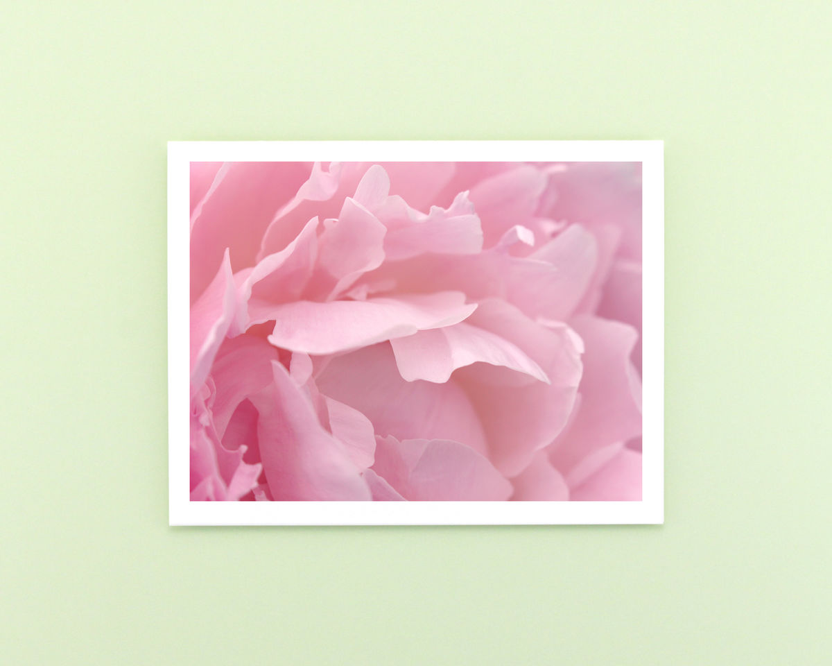 Pink Peony Flower Petals Photo Note Card - product images  of