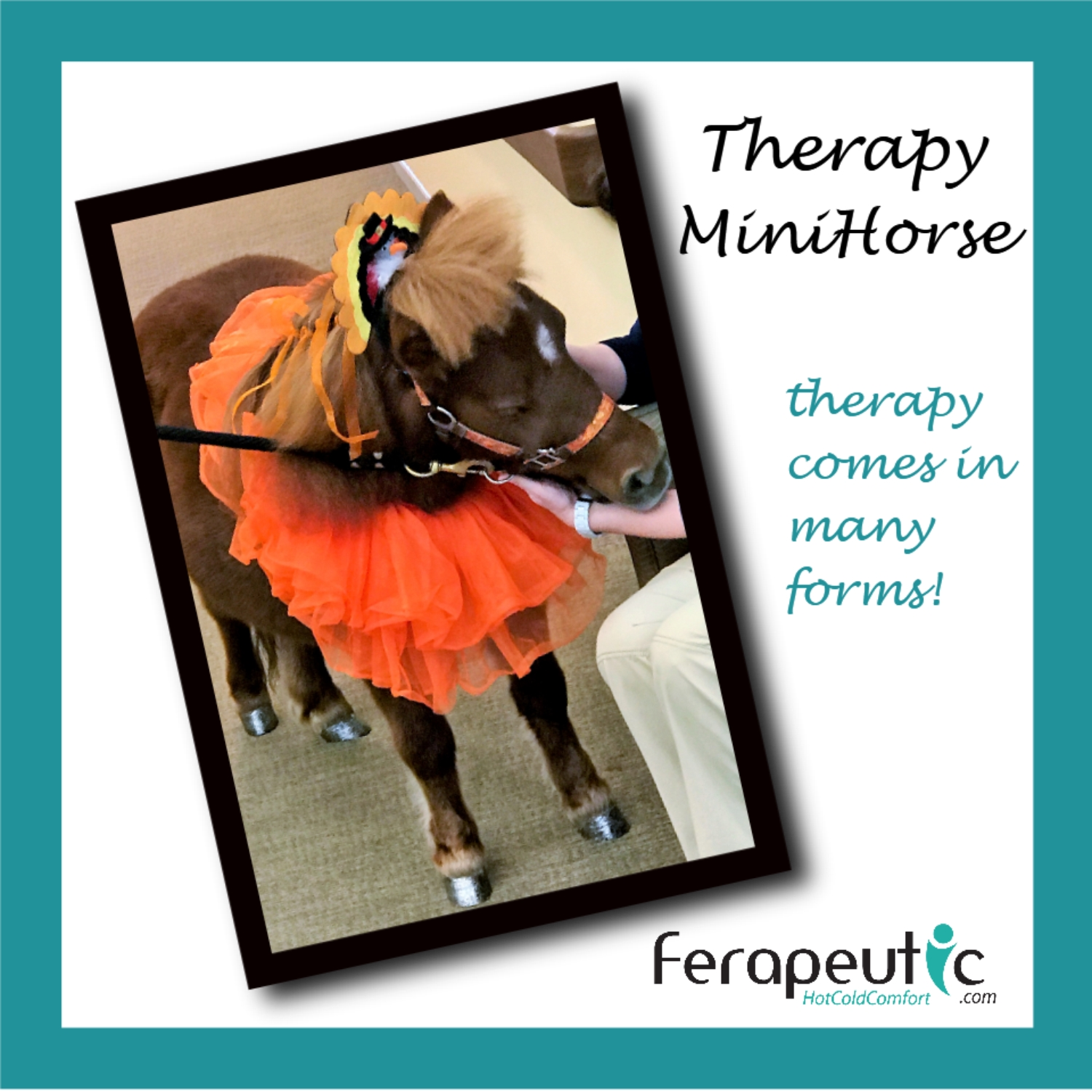 Therapy Animal