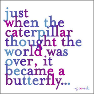 just,when,the,caterpillar,magnet,quotable, inspirational, quotes, quote, magnet, international, hong kong