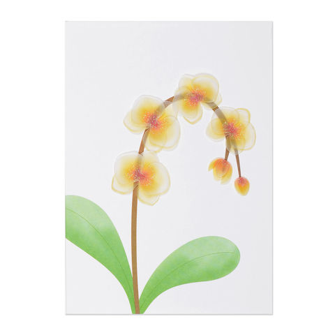 Vellum,Orchid,papyrus, handmade, greeting, card, sympathy, vellum, orchids, orchid, international, hong kong