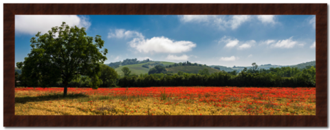 Mohnfeld,Toskana,Photography, Fotografie, Italien, High-Quality Paper, Art, Digital Art, Toskana, Tuscany