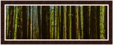 Redwood's...,Photography, Fotografie, USA, United States, High-Quality Paper, Art, Digital Art, Bäume, Wald,