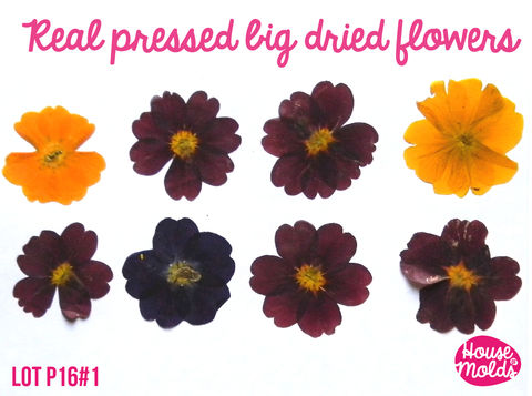Real,Dryed,pressed,Flower-set,of,6,big,size,(approx,4,cm=1.6,),3,colours,burgundry,purple,and,yellow,ideal,for,resin,inclusions,,scrapbooking,home,decoration,art,projects,dried flowers,pressed flowers,stuff to embed on resin,resin embedding-pressed flowers in resin-Supplies,Bead,bead_supplies,resin_crafters,pendant_necklace,eyepin,beadcap,leaf_skeletons,dried_leaves,skeleton_leaves,magenta,dried_flowers,pink_skeleton_leave