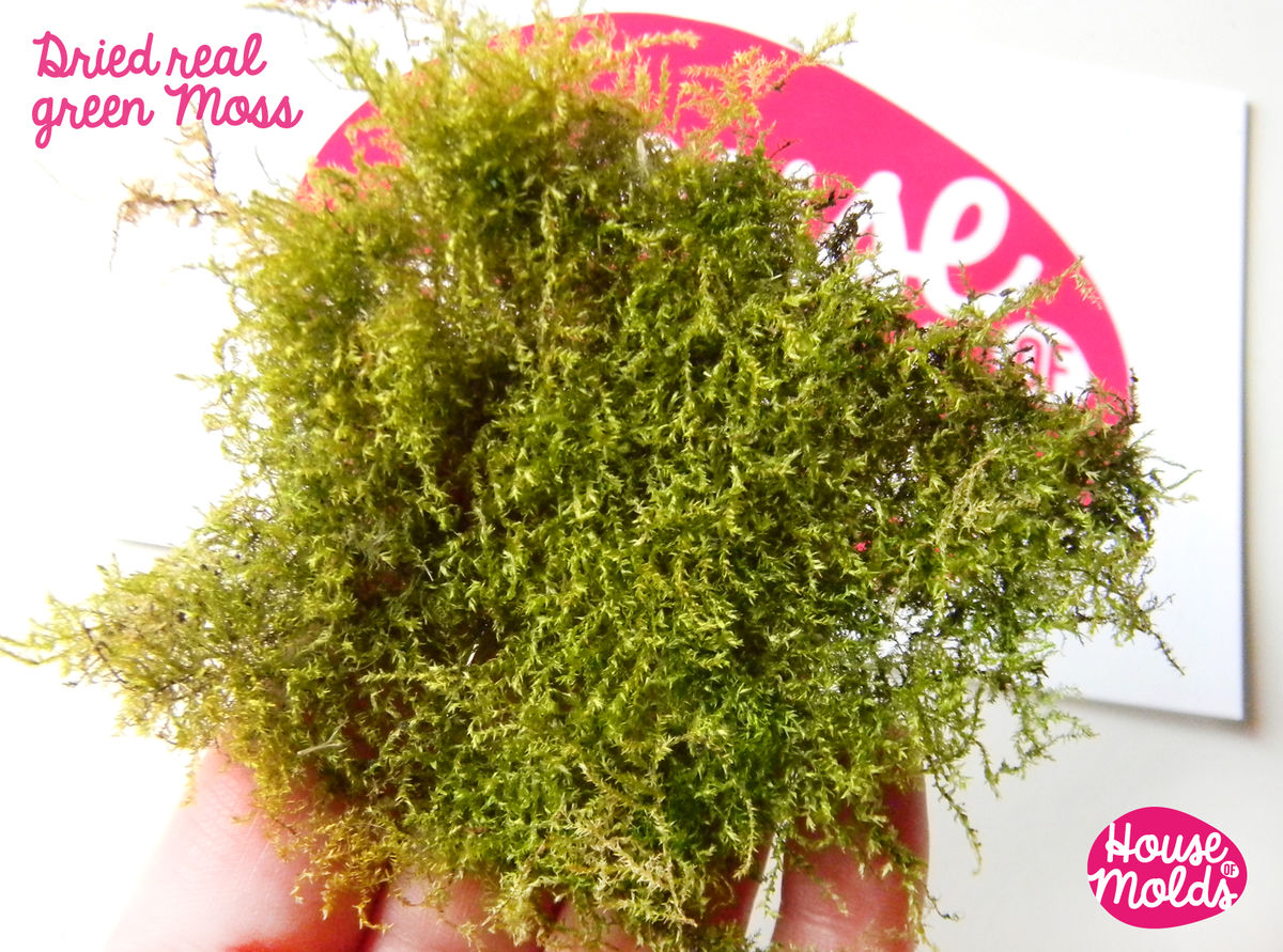 Dryed Natural Green Moss,ideal for any type of resin inclusions ,scrapbooking,home decoration art projects  - product images  of