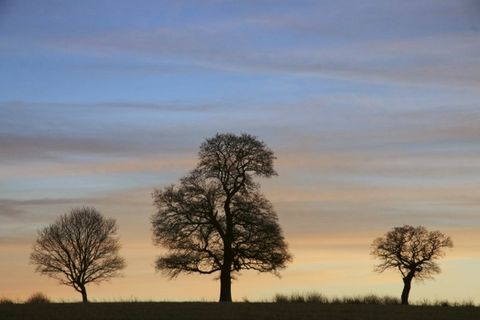 Sunset,Three,Sunset trees, tree print, tree photo print, tree wall art, tree wood prints, Norfolk countryside, sunset, colorful tree prints