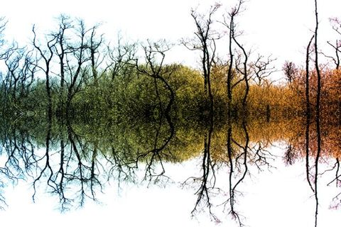 Colour,Tree,Symmetry,Colour tree symmetry, tree prints, photo art tree, symmetry print, wall art, photos on wood, prints on wood, wood prints