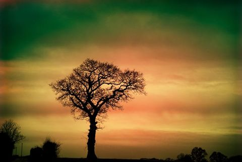 Colourful,Lone,Tree,Lone tree, solo tree, tree print, countryside print, photo art print, colorful tree print, prints on wood, wood prints, tree wood print,