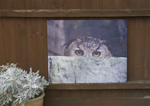 The,Watchful,Owl,Garden pictures, wood prints, wood printed, garden images, owl picture, owl photograph, eagle owl, garden prints, wood garden prints.