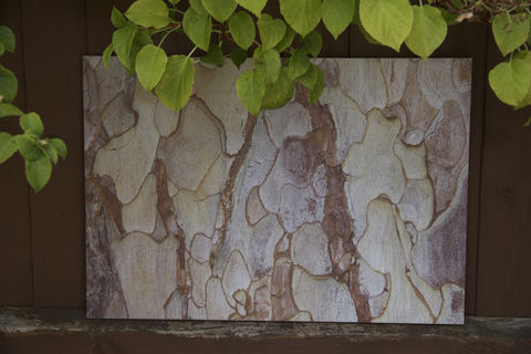 Bark,one,garden prints, wood prints, prints on wood, garden art, garden pictures, bark picture, bark print, natural wood print