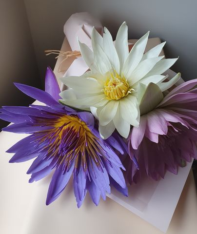Water,Lillies,water lillies, bunbury flowers, victoria st bunbury, bunbury florist, same day delivery, wildflowers, local flowers