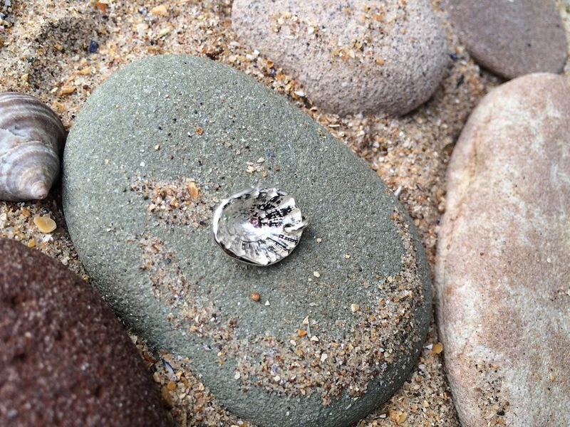 Silver limpet shell charm - product images  of