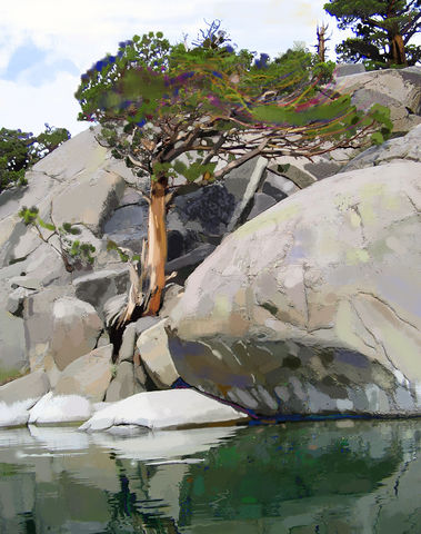 Wind,,Water,and,Granite,snow plant, pine cones,Sierra nevada,persistence,Pinecrest lake,brad burns,ancient pine,sierra nevada,mountians,pine,pine tree,old tree,sunset,high sierras,mountain lake, lake,california,water