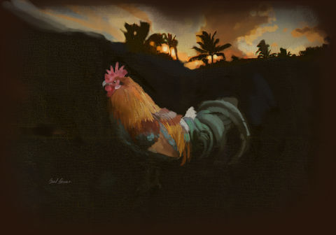 Kauai,Red,Rooster,brad burns,Kauai rooster,kauai chicken,hawaii chicken, palms,sunset,kauai sunset