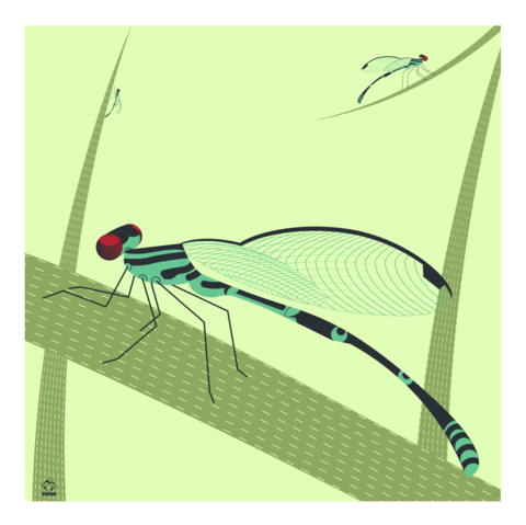 Dragons,&,Damsels,Dragonflies,10x10,Giclee,Print,nature,Design,spring,science,dragonflies,swamp,reeds