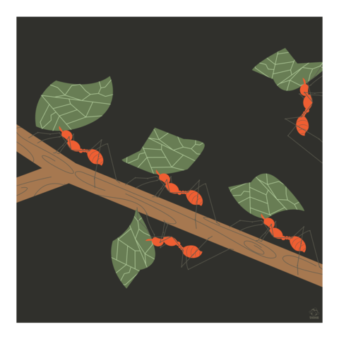 Those!,Leaf,Cutter,Ants,10x10,Giclee,Print,nature,Design,spring,science,leafcutter,ants,Bugs,insec
