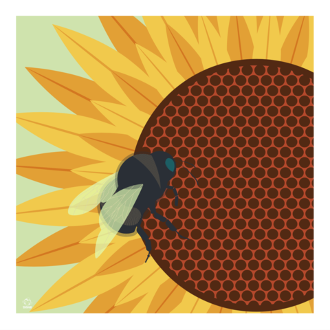 Bumblebee,10x10,Giclee,Print,nature,Design,spring,science,bees,bumblebees, sunflower, kansas, bumble, dumbledore,