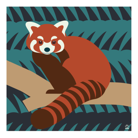 Red,Panda,10x10,Giclee,Print,nature,Design,spring,science,red panda, panda, bamboo, china, cute, animal, dane ault