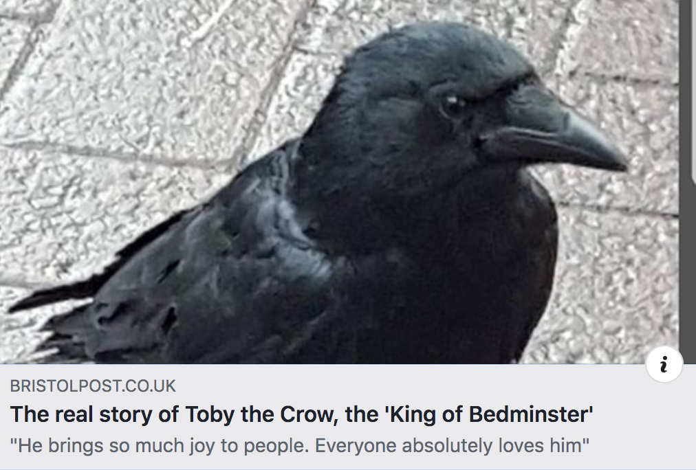 More mews news for you - Toby the crow - the real back story