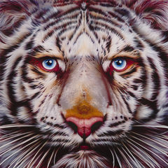 Panthera,Tigris,-,White,Tiger,Limited,Edition,Print,Giclee, Print, White Tiger, Tiger, Airbrush, Art, Limited Edition