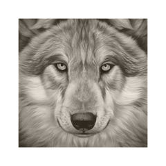 Canis,Lupis,-,Gray,Wolf,Vintage,Edition,Print,Giclee, Print, Black Rhino, Rhino, Airbrush, Art, Limited Edition,Diceros Bicornis