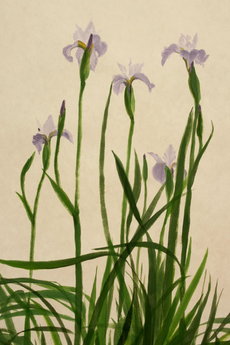 Iris Sibirica 'Pleasures of May' - product images  of