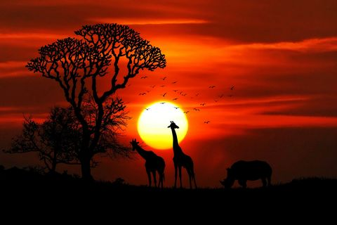 Sunset,Giraffe,(wilda5),Sunset Giraffe