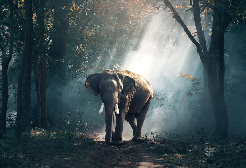 Lone Elephant(wilda17) - product images