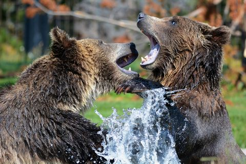 Bear,to,(wilda11),Bear to Bear
