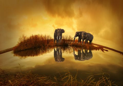 Elephants,in,the,Clouds,wilda9,Elephants in the Clouds