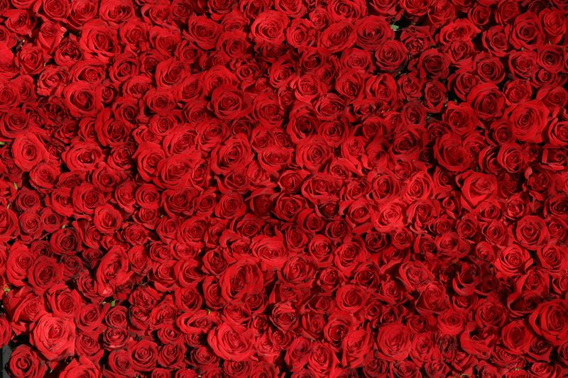 Field of Roses (arty7) - product images