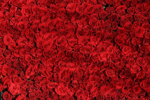 Field,of,Roses,(arty7),Field of Roses