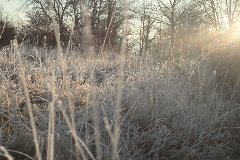 Frosty,morning