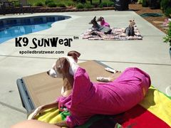 K9 Sunwear™ HOODIE UV Protection for Italian greyhounds and small dogs - product images 1 of 12