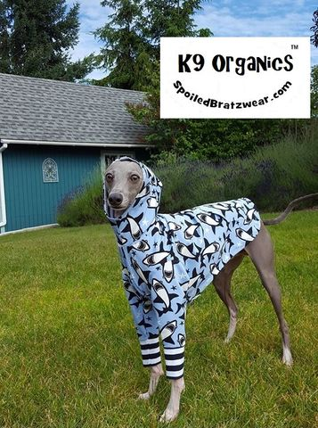 Organic,Sharks,'n,Stripes,Custom,Italian,Greyhound,Hoodie,asher the italian greyhound, viral video, italian greyhounds, organic dog clothes, UV dog clothes, spoiled bratzwear
